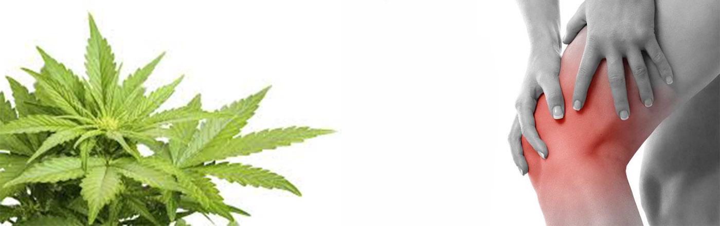 L' efficacia della Cannabis nell' artrite