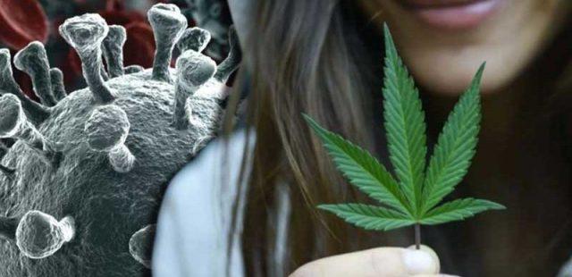 La cannabis aiuta a sconfiggere i gravi effetti del Covid: i nuovi studi